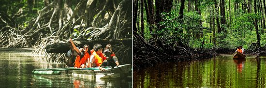 Sabang, Philippines: Mangrove Forest