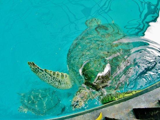 Sea Turtle Conservation Center, Sattahip