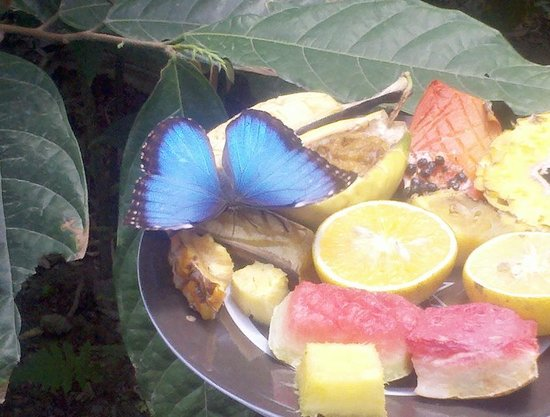 Butterfly Haven : Feeding time!