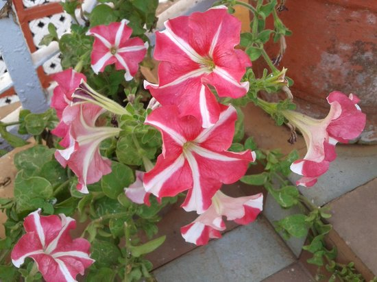 Park Plaza Mahabaleshwar: Flowers