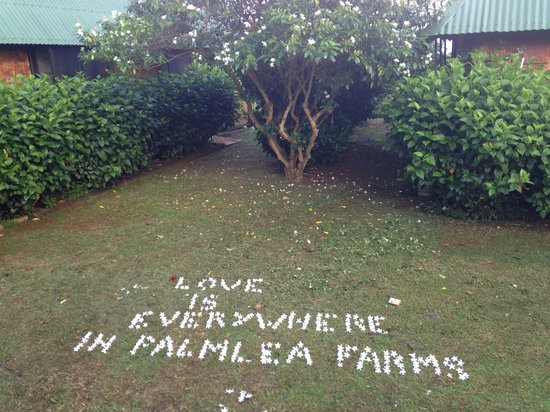 Palmlea Farms Lodge & Bures: We woke up and felt like showing our appreciation.