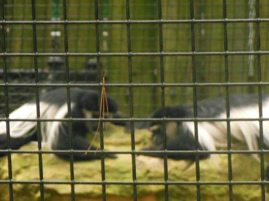 Chehaw Park: monkies