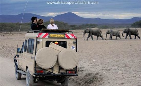 Super Cats Tours and Travel - Private Day Tours : Kenya and  tanzania tour with super cats tours and travel.