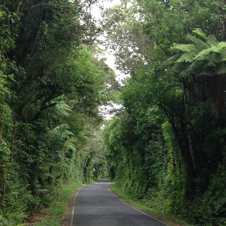 Dawson Falls Mountain Lodge: Drive into Egmont National Park, lovely drive to the lodge