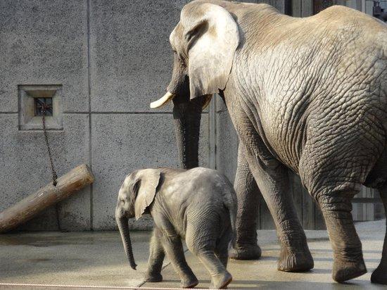 Ehime Tobe Zoo : 像の親子
