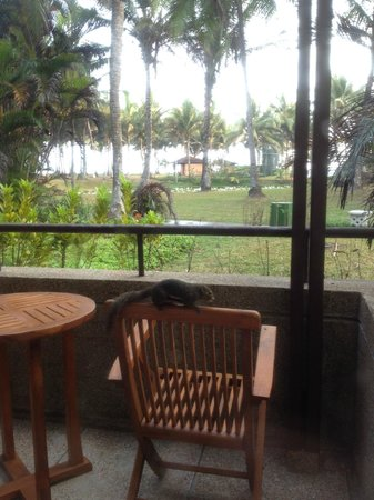 Club Med Bintan Island: View from room, including wildlife!