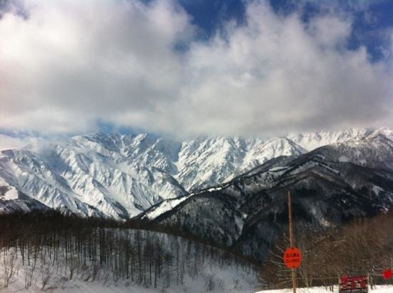 Elk at Hakuba: tough views