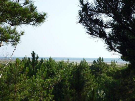 Espaces Equestres Henson : beau point de vue pour admirer la mer