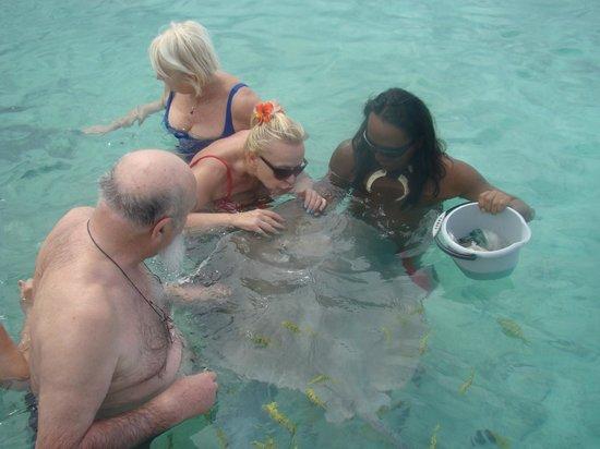 Tanoa Private Tour: baignade avec les raies et requins pointes noires