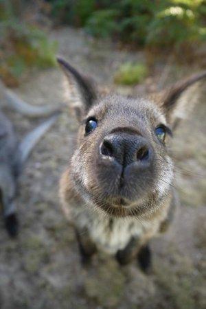 Lumera Chalets: 'Do I smell pelletts?!'