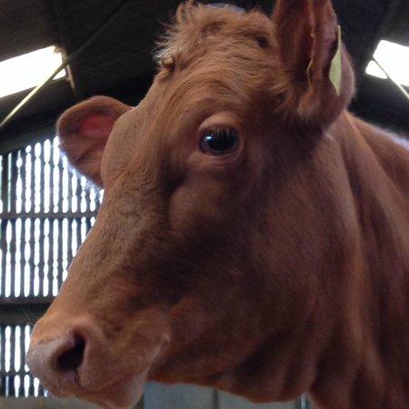 Brymor Dairy: Brymor cows