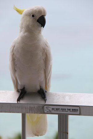 a cockatoo on the balcony rail at Reef View Hotel