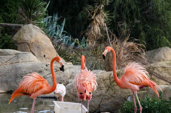 Friguia Park: Very Pink Flamingoes