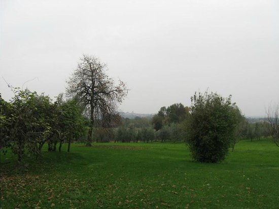 Casa Rossa Ai Colli : Olive trees