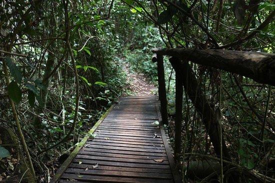 Hotel Fazenda Serra Da Cachoeira: Caminho para a cachoeira