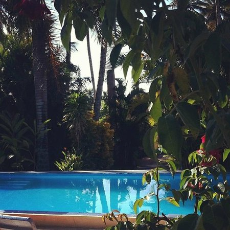 Paradise Surf Apartments : view of pool and garden