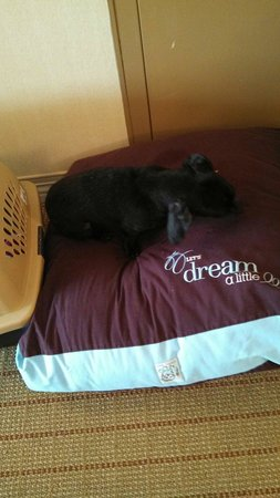 Sheraton Louisville Riverside Hotel : The Dog Loved His Bed Too!