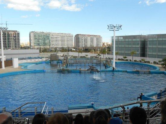 Oceanografic: Spettacolo dei delfini
