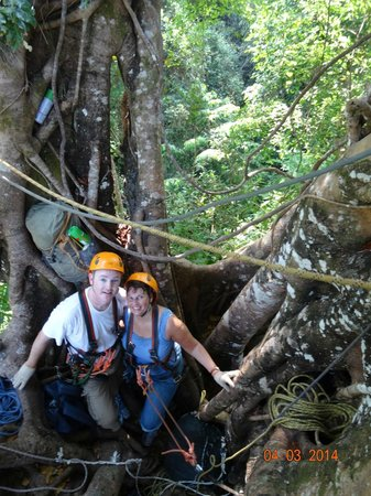 Langkawi Canopy Adventures: Having a rest in a very very tall tree.