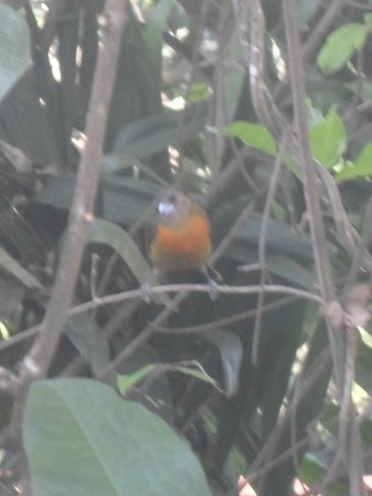 Falls Resort at Manuel Antonio : Birds