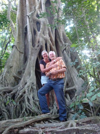 D'Arcy of Daintree 4WD Tours : Fig tree