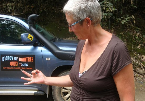 D'Arcy of Daintree 4WD Tours: Small butterfly