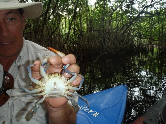 Tour the Glades : Tod showing us a female crab. He carefully returned it safely to the water.