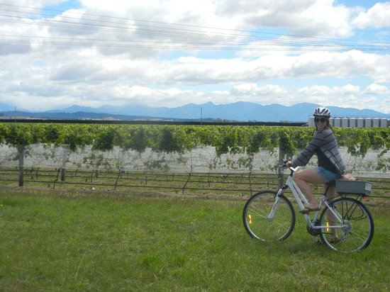 The Gentle Cycling Company: vineyards!