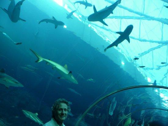 Underwater World and Dolphin Lagoon: tunnel degli squali