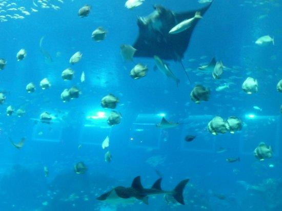 Underwater World and Dolphin Lagoon: acquario principale