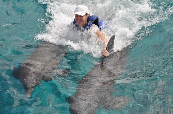 Dolphin Discovery Cozumel : Dolphin fin ride