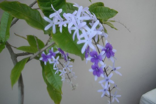 Tres Sirenas Beach Inn: Flowers on the resort grounds