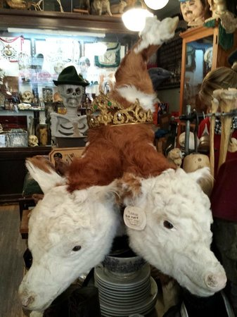 Obscura Antiques & Oddities