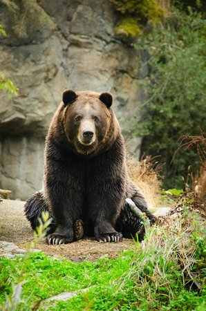 Woodland Park Zoo : Grizzly bear