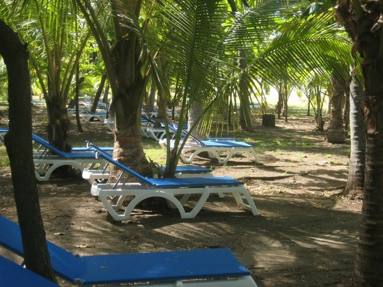 Barceló Montelimar: Trees at the beach.