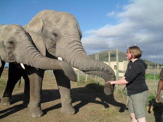 Umkhondo Big Five: Feeding the elephants