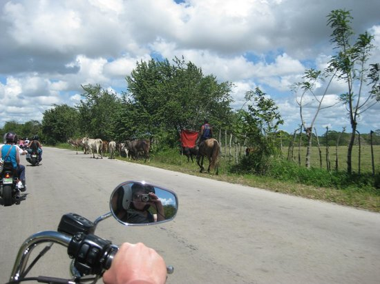 Dominican Riders - Day Tours : Watch For Cows