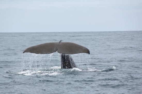 Whale Watch : and it slips below the waves.
