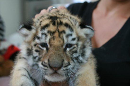Zoological Wildlife Foundation: ZWF 03/02/2014