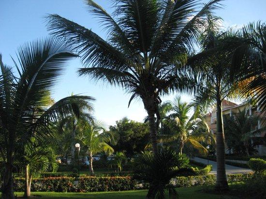 Grand Bahia Principe Bavaro : view from room
