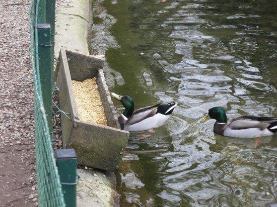 Jardin Public de Saint-Omer : The birds had their own feeding area