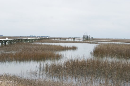 Hobcaw Barony Visitors Center : Marshlands