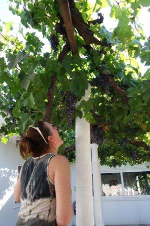 Hostal Petit Verdot: Op de patio