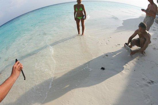 Coco Palm Dhuni Kolhu : Новорожденная черепашка бежит в океан