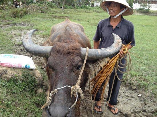 Tra Que Water Wheel: Water buffalo