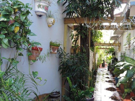 Coqui del Mar Guest House: Entrée vers cour arrière