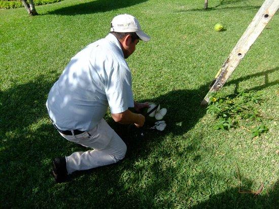 Allegro Cozumel : À notre demande, le jardinier nous donne une noix de coco