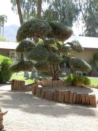 SmokeTree Resort & Bungalows: more of the grounds