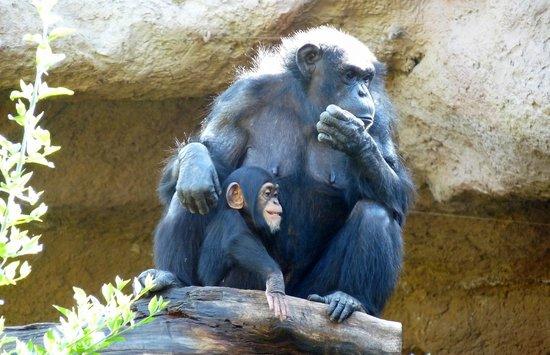 Loro Parque: Mum & baby