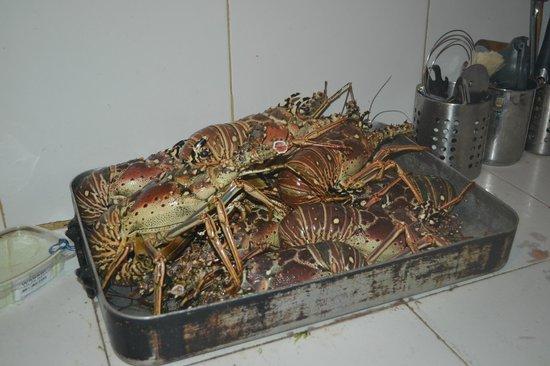 Posada Lagunita: No dia que encomendamos lagosta